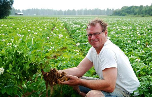 Jon Björs plockar den KRAVmärkta potatisen